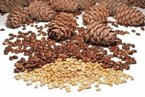 Экспорт кедрового ореха